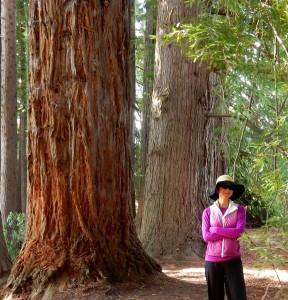 a big trees DSCN4126 - Copy