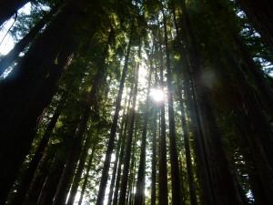 a forest DSCN4156 - Copy