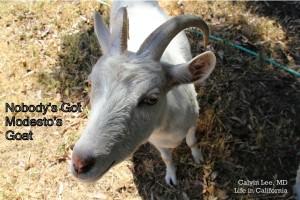 a modesto goat IMG_9542 - Copy
