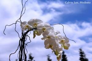 a orchid sky IMG_5710 - Copy - Copy